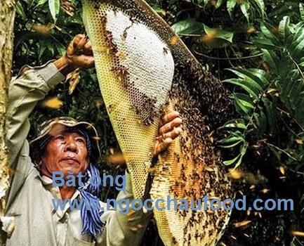 bắt ong rừng